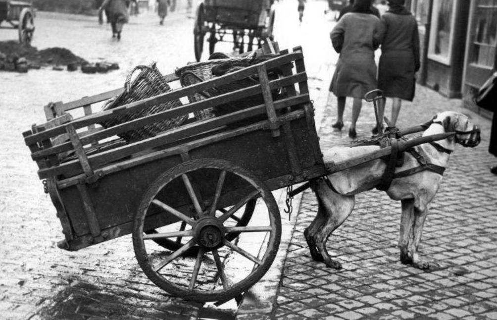 Hondenkar, Maastricht 1932 (Nationaal Archief / Collectie Spaarnestad)