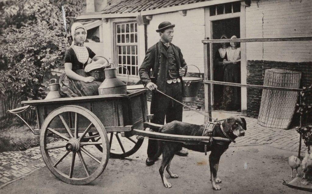 Man en vrouw in Walcherse streekdracht bij hondenkar, circa 1905 - 1937. (foto: Geheugen van Nederland)