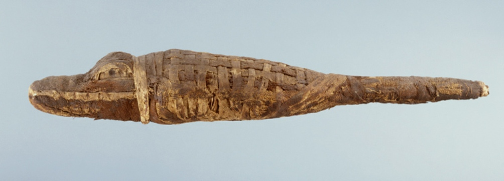 Voorbeeld van een krokodillenmummie. (foto: Wikimedia)