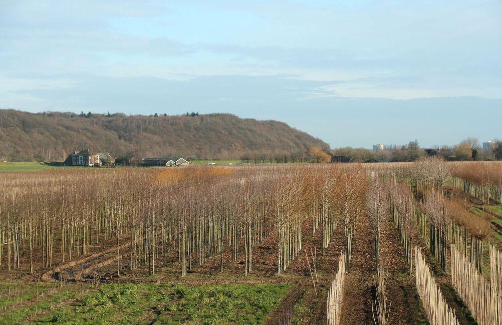 De Grebbeberg vanuit het zuiden gezien.