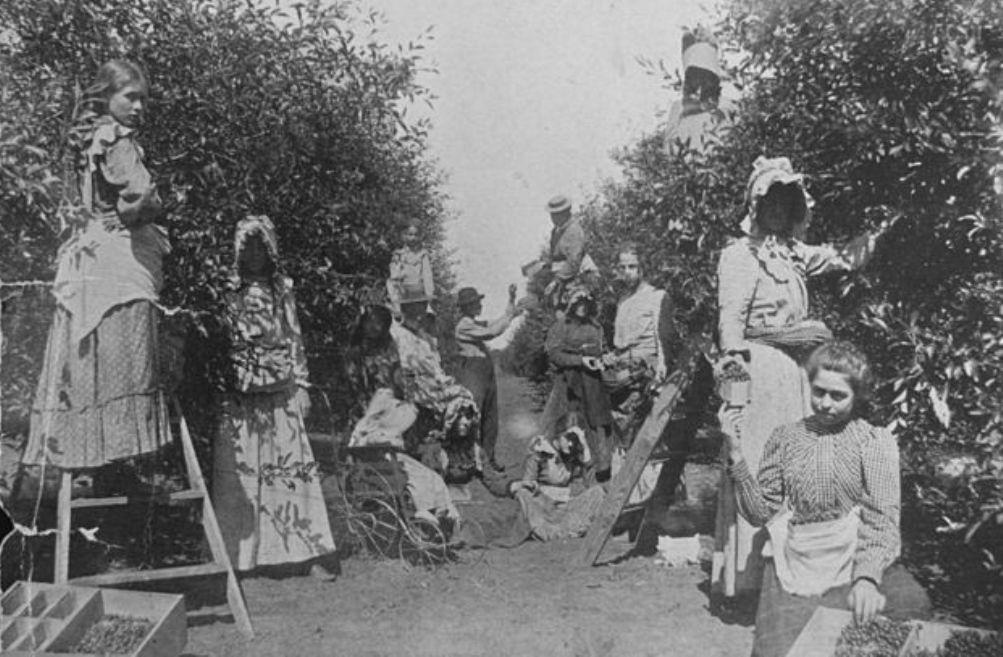 Vrouwen aan het werk als kersen plukkers op een ranch in Oklahoma omstreeks 1900. Zelfs de kinderen werden weleens meegenomen naar het werk, zie de baby in de wandelwagen. Iemand moest tenslotte voor ze zorgen, ook al was je als vrouw zelf aan het werk (Foto:Wikimedia)
