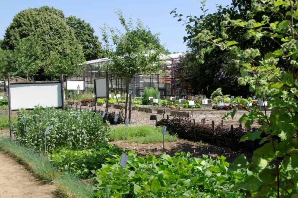 Kijkje in de Historische Groentehof van Jac Nijskens in Beesel. In de tuin groeien 650 soorten vergeten groenten en fruit, eetbare bloemen en kruiden. (foto: De Historische Groentehof)
