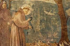 Franciscus: de heilige van dierendag