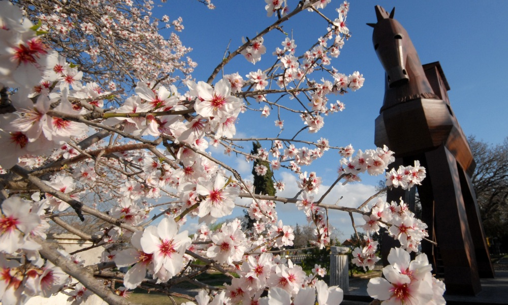 Het beroemde Paard van Troje verbeeld in hout (foto: Allard Pierson Museum)