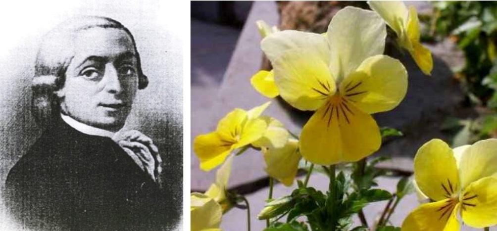 Links: scheikundige Jean-Jacques Dony (1759-1819). Rechts: Het zinkviooltje komt veelvuldig voor in de omgeving van het voormalige Neutraal Moresnet. De bloem floreert op bodems met een grote hoeveelheid zink, zoals die in de buurt van de oude mijn.