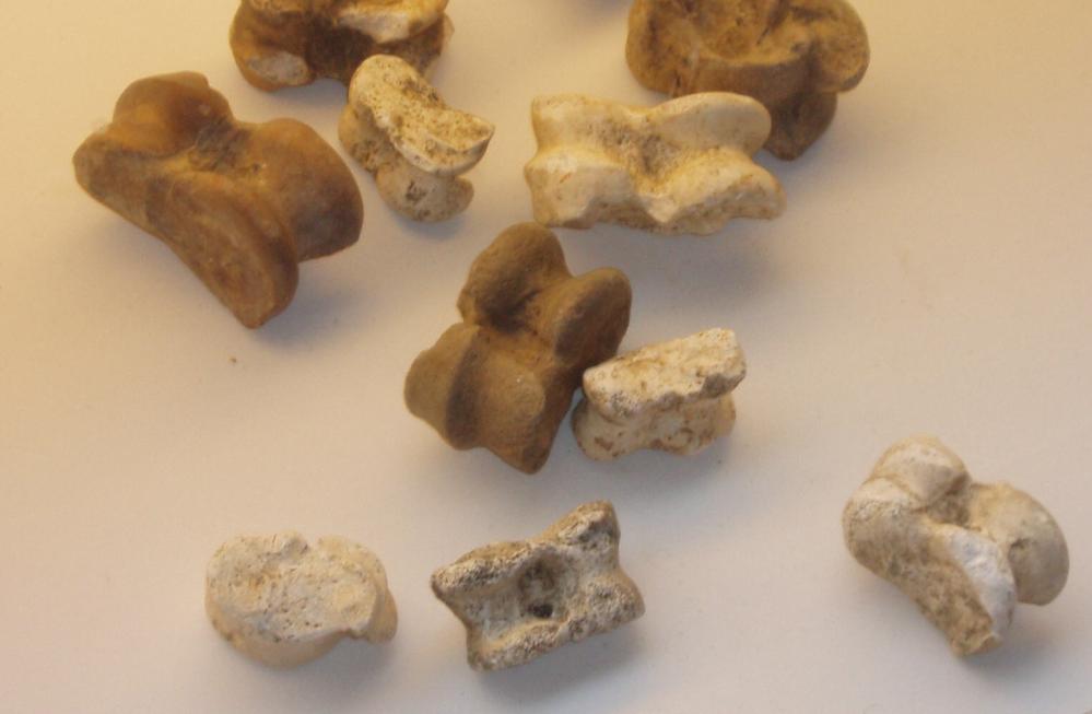 Bikkels zoals die gebruikt werden bij het bikkelorakel. Van oorsprong werden hiervoor het sprongbeen (kootje) van een schaap gebruikt. (Foto: Wikimedia)