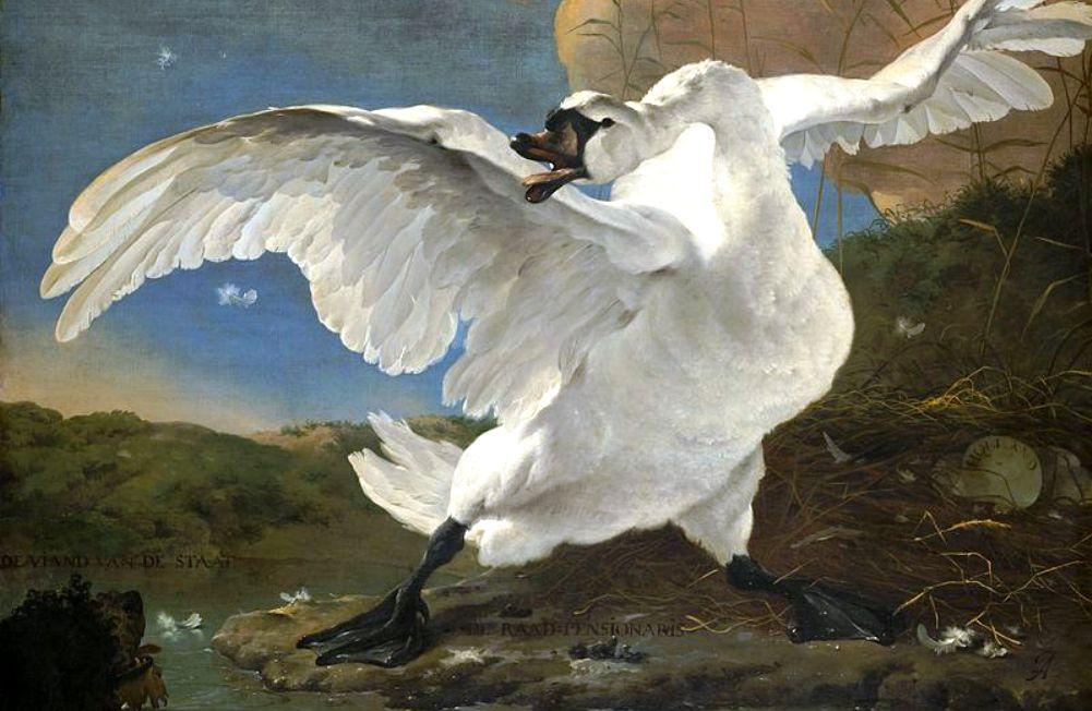 Een topstuk van het Rijksmuseum: De bedreigde zwaan van Jan Asselijn. (foto: Wikimedia)