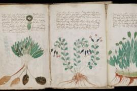 Het mysterie van het Voynich-manuscript