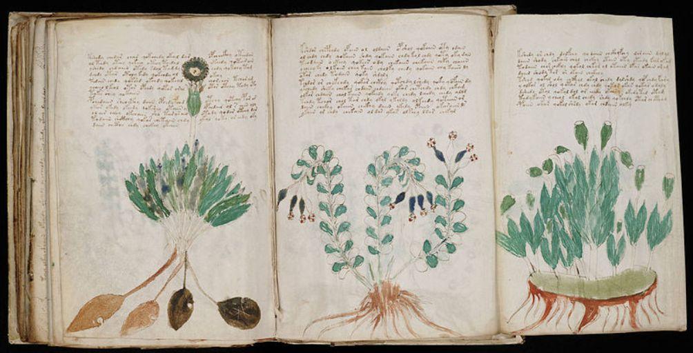Foto: plantkundige illustraties uit het Voynich-manuscript